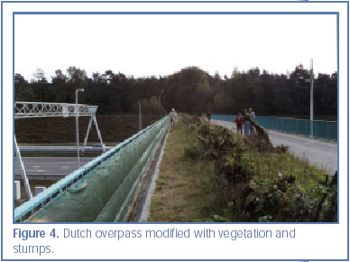 Figure 4. Dutch overpass modified with vegetation and stumps