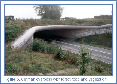 Figure 5. German overpass with forest road and vegetation.
