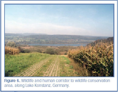Figure 6. Wildlife and human corridor to wildlife conservation area, along Lake Konstanz, Germany.