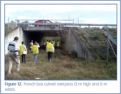 Figure 12. French box culvert overpass (3 m high and 6 m wide).