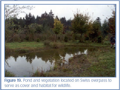 Figure 19. Pond and vegetation located on Swiss overpass to serve as cover and habitat for wildlife.