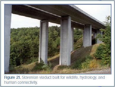Figure 21. Slovenian viaduct built for wildlife, hydrology, and human connectivity.